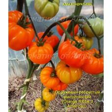 Оранжевый ребристый американский (Orange Ribbed American)