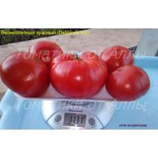 Великолепный красный (Delicious red)