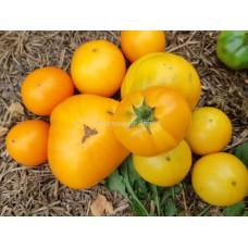 Гном Оранжевый крем (Dwarf Orange Cream)