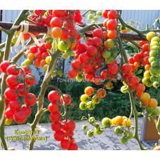 Конфетки (Pralinen-tomate)