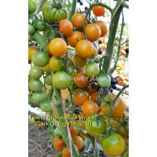 Тёмно-оранжевый мускат (Dark Orange Muscat)