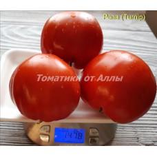 Репа (Turnip)